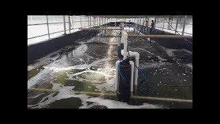 Biofloc fish farming, minimum cost Tank, feed  Nawjawan