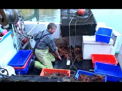 Lobster / Crayfish Fishing