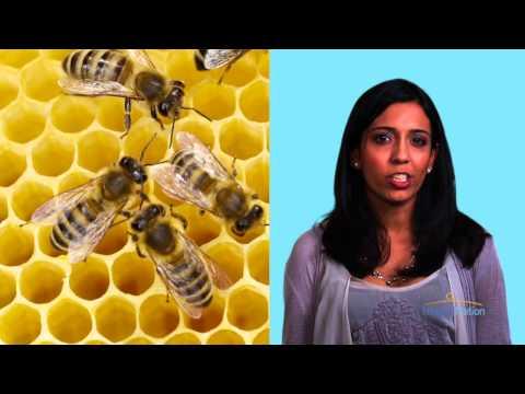 Local Honey & Allergies Myth | HealthiNation