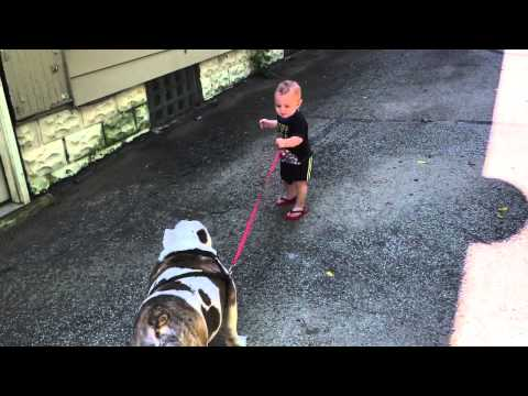 11-month-old trying to walk 80 pound bulldog