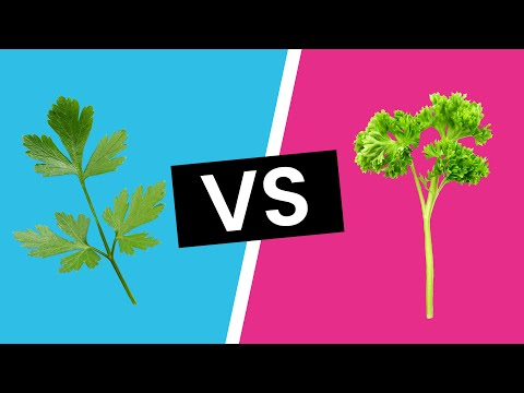 Italian Parsley vs. Curly Parsley - What's the Difference?