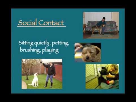 Stress Reduction for Shelter Dogs