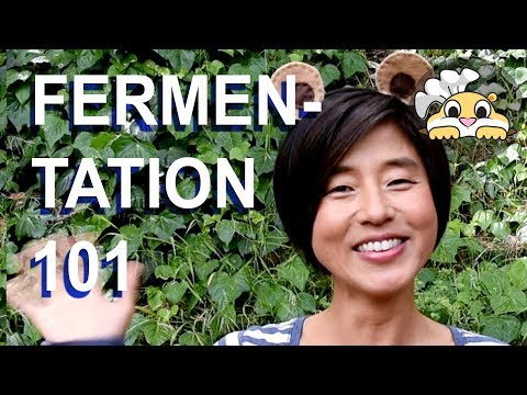Fermentation 101 from  the Fermentation Experts - Kimchi Power series Ep.4