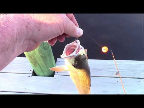 Dock Fishing in North Carolina ... Ego buster. Did See Mullet Jumping, Thats Entertaining :)