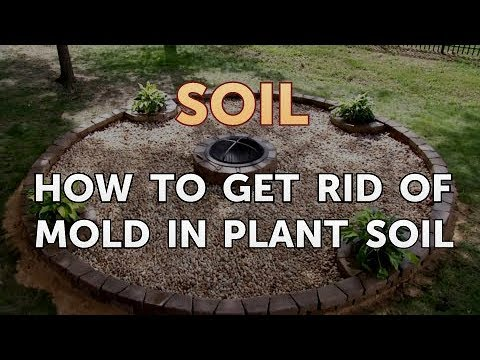 How to Get Rid of Mold in Plant Soil