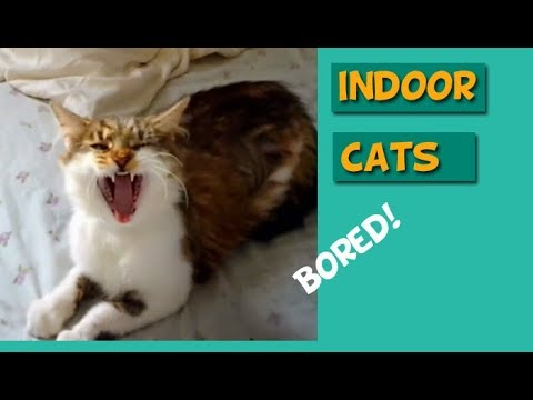 Indoor Cats Enrichment: How to Care for your Cat