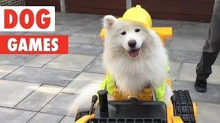 Dog Games | Playful Pups Compilation