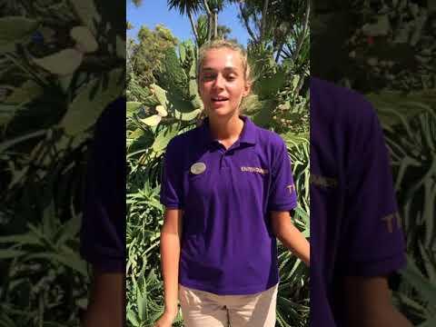 Summer Jobs Cyprus TMC247