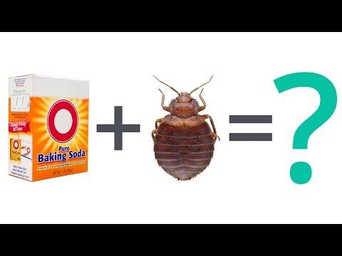 Bed Bug FAQ: Can Baking Soda Kill Bed Bugs?