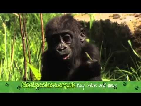 Blackpool Zoo TV Advert 2015