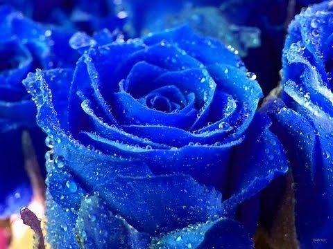 blue flowers -  blue flowers meaning