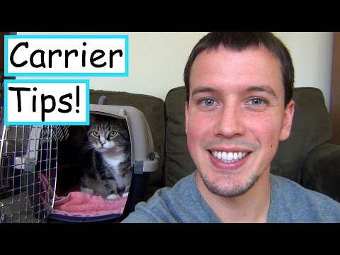 Getting Your Cat In the Carrier Without The Stress!