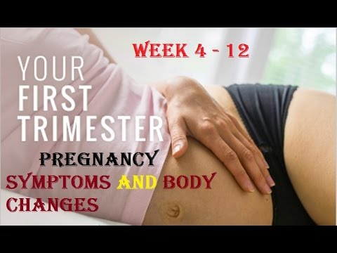 First Trimester Pregnancy Symptoms (Week 4 - 12) - 4 weeks pregnant -