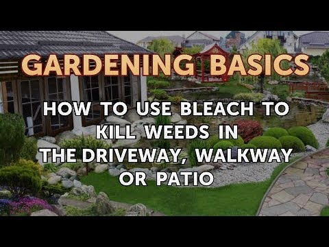 How to Use Bleach to Kill Weeds in the Driveway, Walkway or Patio