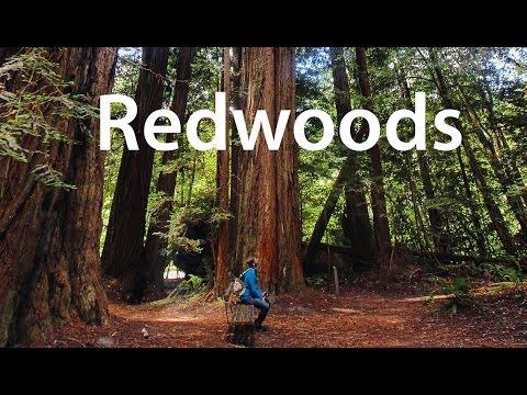 A Ramble Through Redwood National Park - Gopro / Feiyu - June 2016