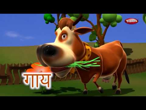 Animal Facts in Hindi | Cow Facts Hindi | Cow Essay in Hindi | Cow Song | Cow Story | Cow Sound