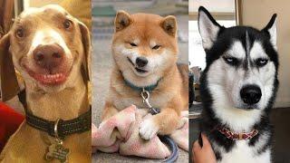 21 Hilarious Dog Viral Videos | Ultimate Dog Compilation 2020