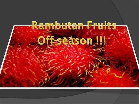 Off season rambutan fruits !!!