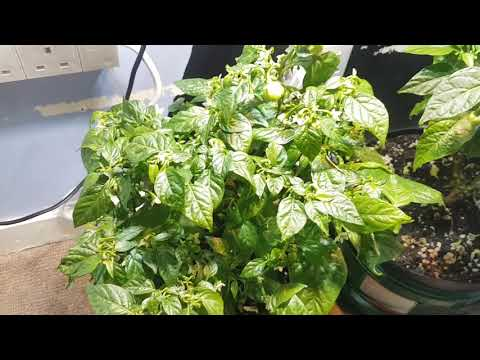 Indoor plants so far!💡