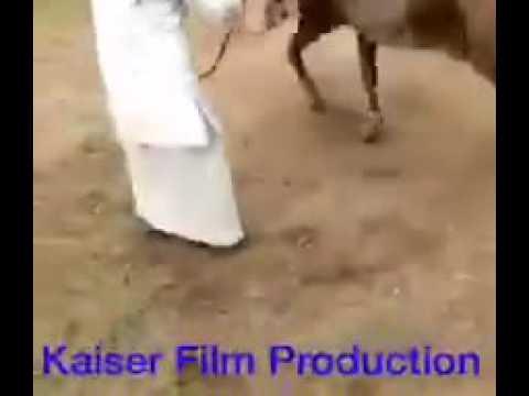 Xxx Mp4 Hot Sapna Dance Vs Horse Dance सपना Vs घोड़ा 3gp Sex