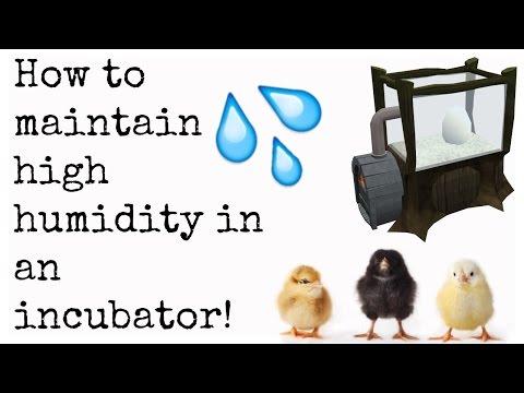 HUMIDITY HACKS: High humidity in incubators | Cgpets101