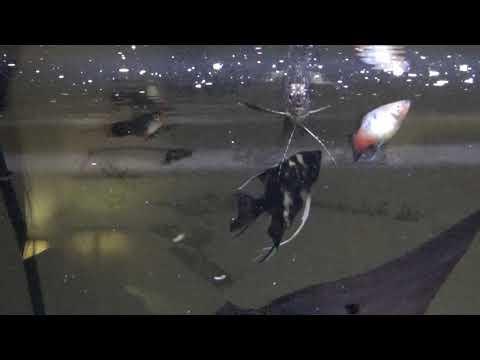 55 Gallon Community Aquarium Feeding & Update
