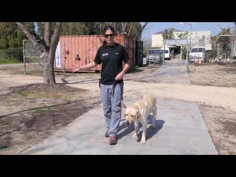 Best Dog Training Tip #4 - Walking Your Dog