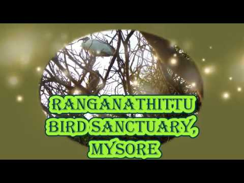 Ranganathittu Bird Sanctuary Mysore   Tourist Places to visit in Bangalore