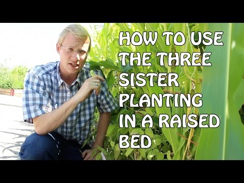 How To Use The Three Sisters Planting In Raised Beds