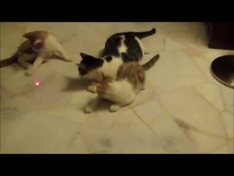 Crazy Mothercat and Kittens vs Red Laser