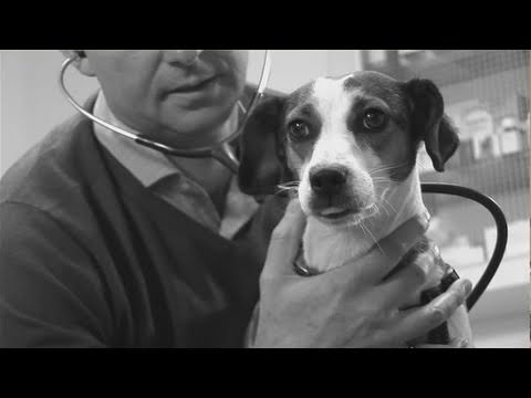 How To Mate Pet Dogs