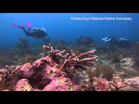 Dive Voluntourism in the Florida Keys