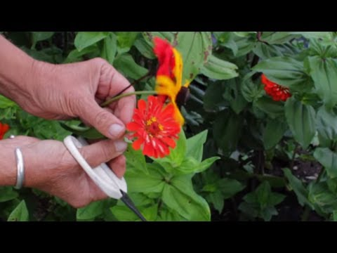 How To Dry Flowers   How To Preserve Flowers Very Quickly