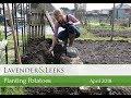 Katie's Allotment - April 2018 - Planting Potatoes