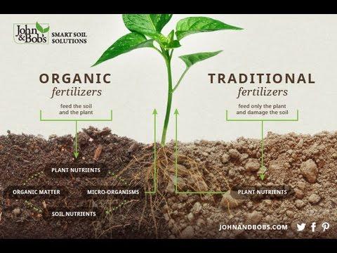 21st Century Garden: Healthy Soil, Nutritious Food & Compost Tea (Elaine Ingham)