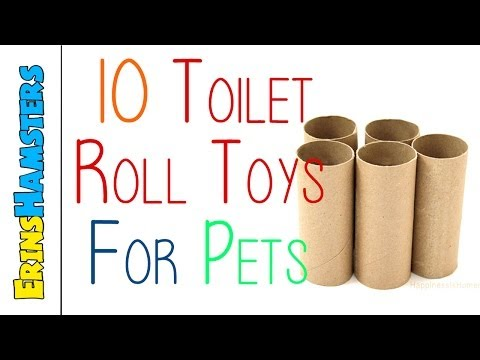 10 Toilet Roll Toys For Small Pets