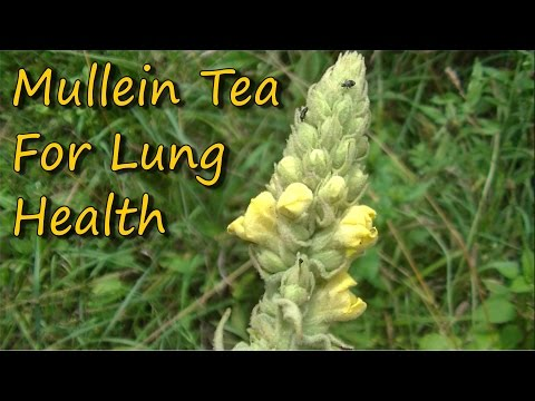 Easy To Make & Healthy Mullein Tea