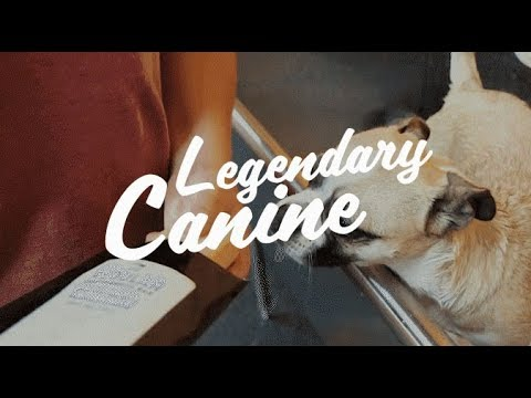 Legendary Canine - 100% NATURAL DOG CARE PRODUCTS
