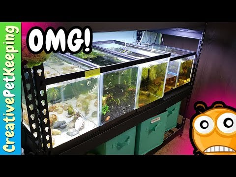 All of my Baby Fish - SURPRISE SECRET SPAWN - Fish Fan Friday LIVE