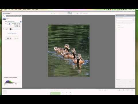 How To Add A Watermark to Your Images Using Picasa