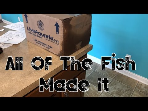 Red Sea Reefer 250 | Live Aquaria Shipment | Adding Fish To The Reef |