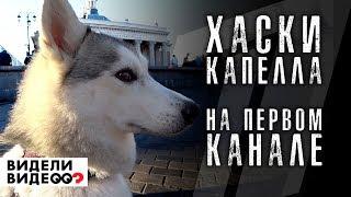Хаски Капелла НА ПЕРВОМ КАНАЛЕ, в программе видели видео