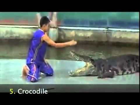 AMAZING!! Top 10 Animal Attacks Caught on Tape