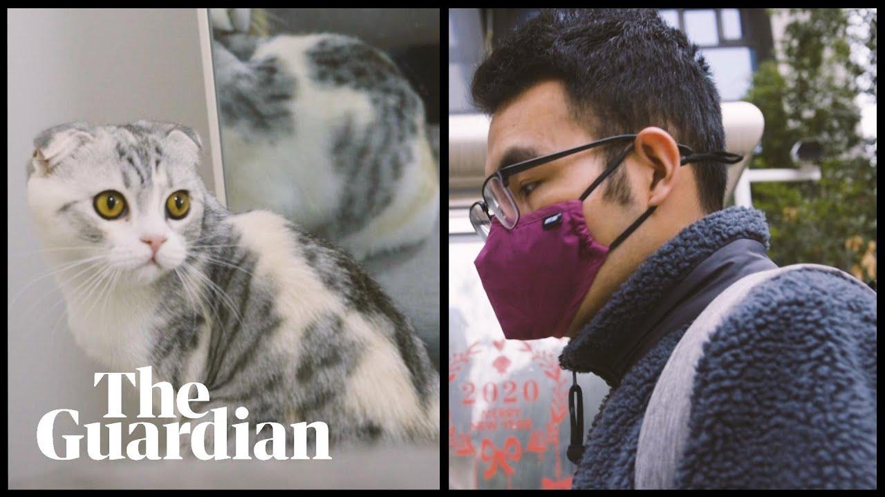 The coronavirus cat rescuer of Wuhan