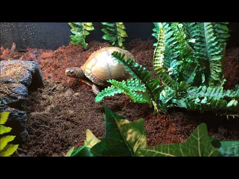 Upcycled Box Turtle Habitat
