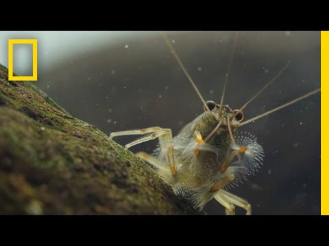 Thanks to Shrimp, These Waters Stay Fresh and Clean | Short Film Showcase