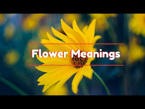Flower Meanings: The Meaning of Different Type of Flowers