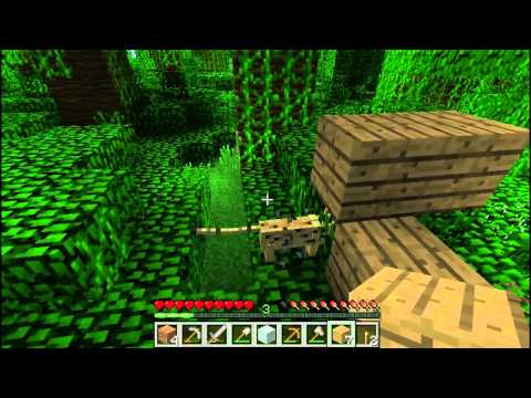How to catch a ocelot in Minecraft