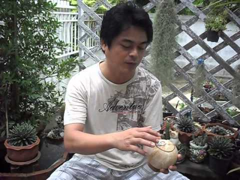 How to easily open coconut shell.