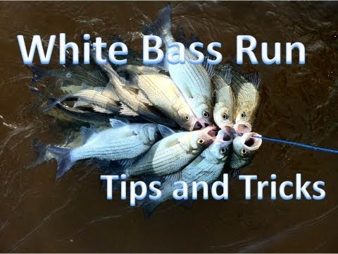 How to catch spawning white bass in rivers and creeks (GoPro Hero 3)
